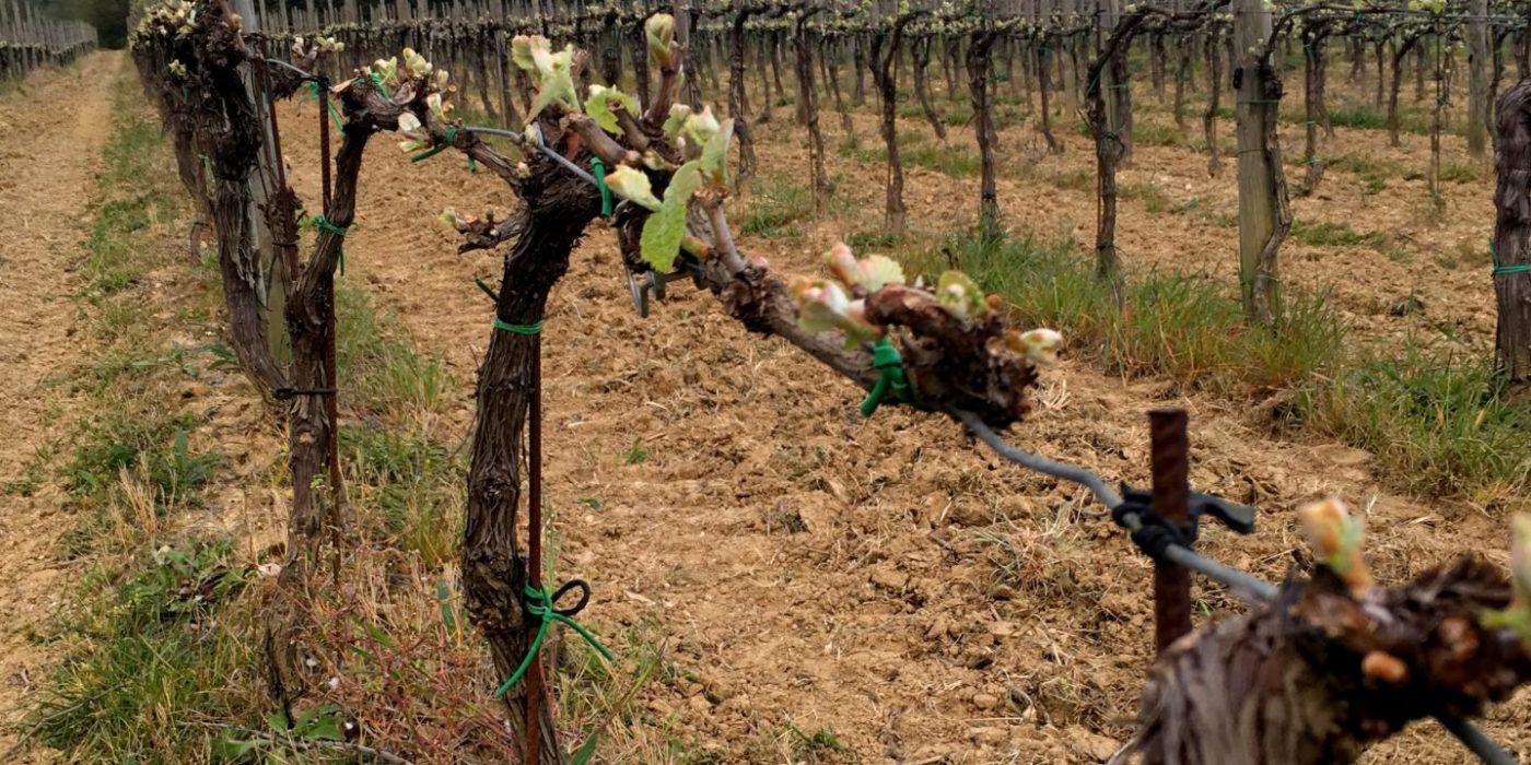 Le lase_vigneti_wineyards
